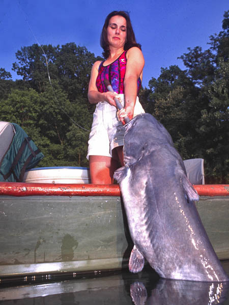 Pickwick dam fishing report rachael edwards for Pickwick lake fishing report