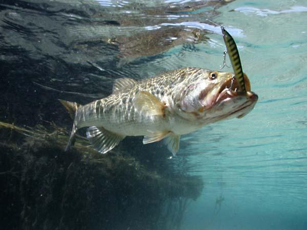Fishing For Beaver Pond Bass
