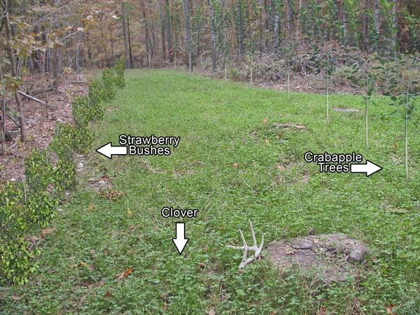 The Ultimate Year Round Food Plot For Deer Quot